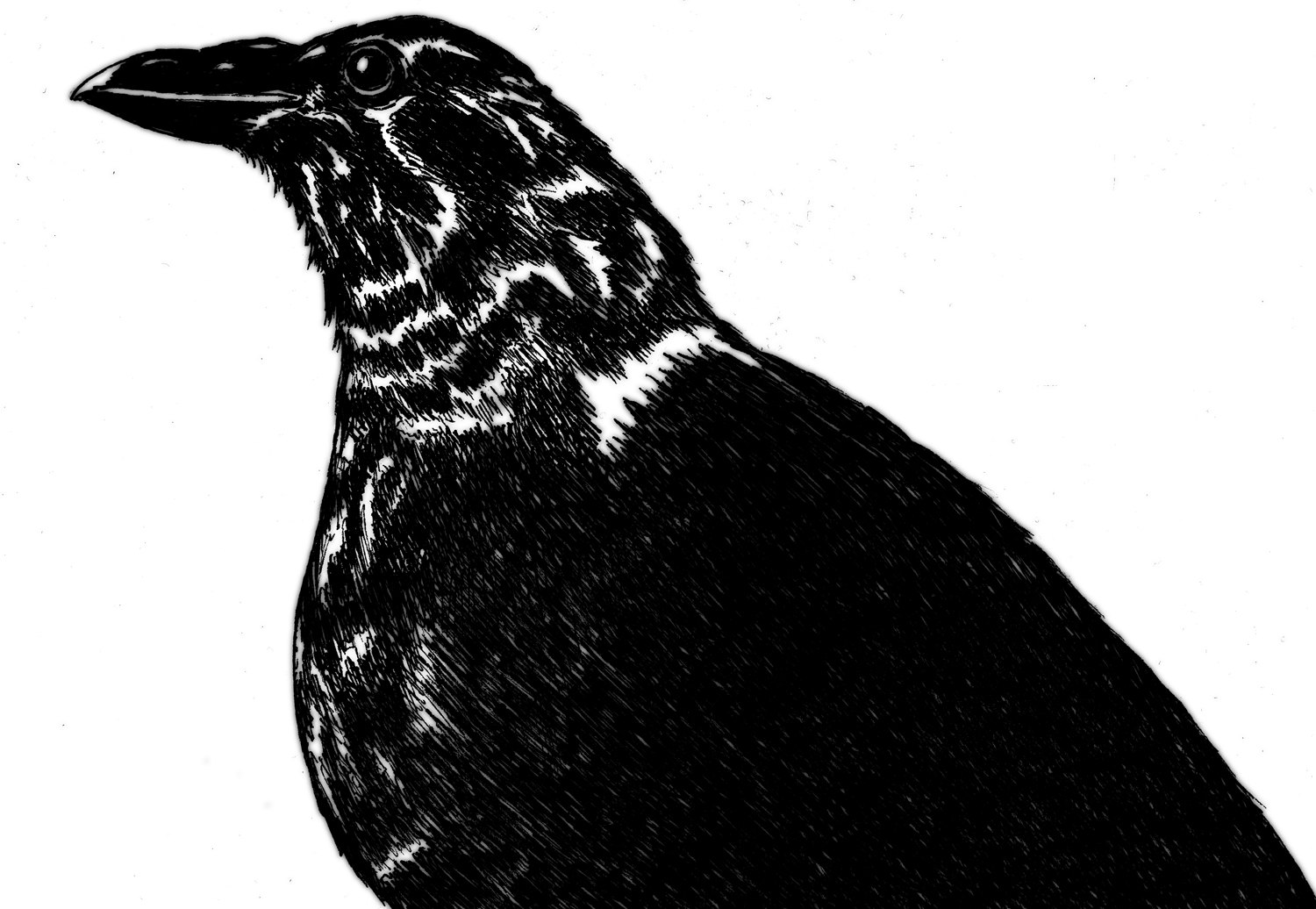The crow - ink